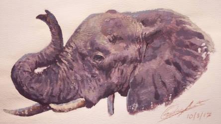 Elephant gouache study
