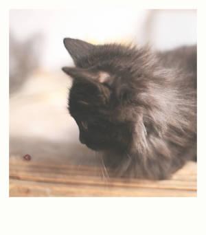 Curiosity kills the cat