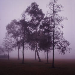 Purple dreamscape