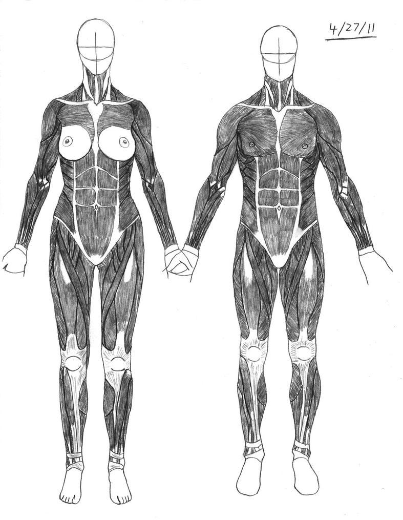 '11-04-27 AnatomySketches_12 by Dredogol