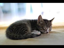 Kitten by tuureo