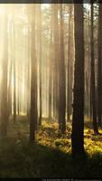 the enchanted forest by kaoru-kamiya