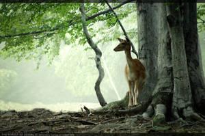 the forest of denial by kaoru-kamiya