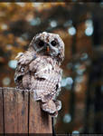 watchful by kaoru-kamiya