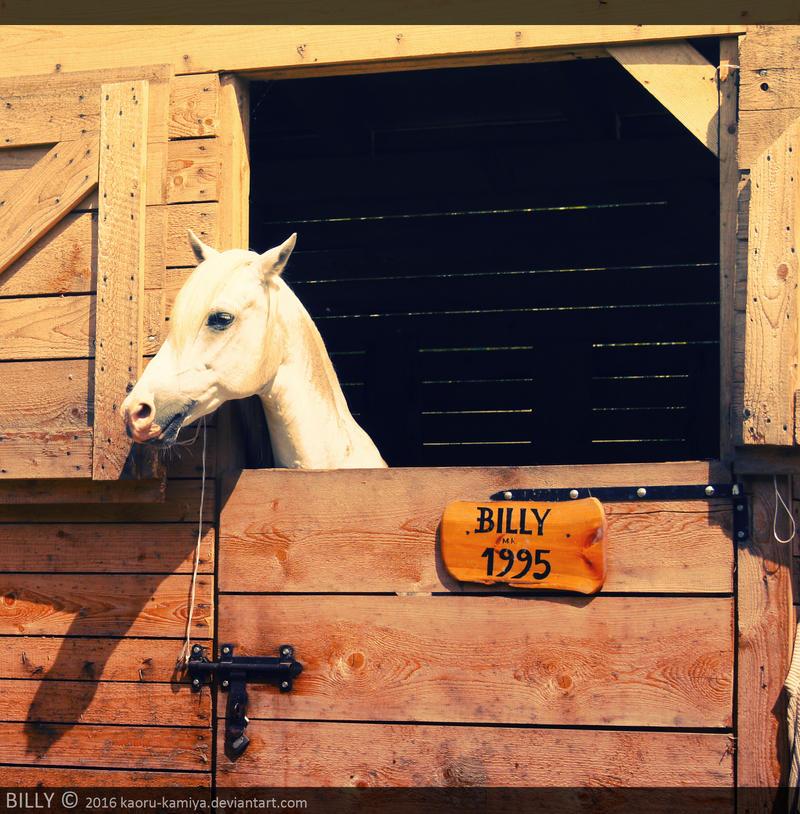 Billy by kaoru-kamiya