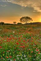 Sundown by gregner
