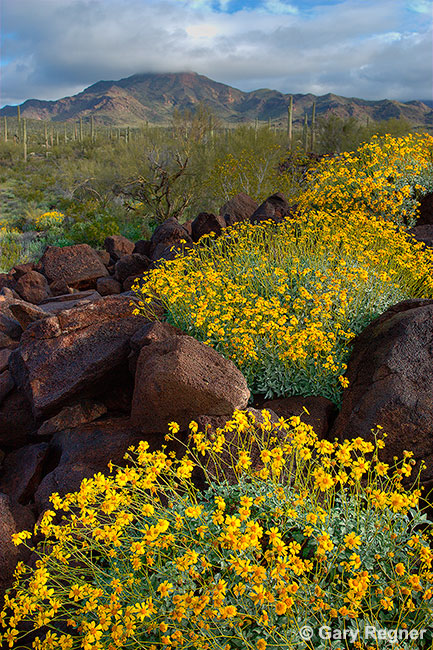 Gold Rush by gregner