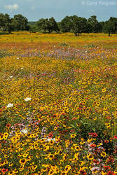 Field of Dreams by gregner