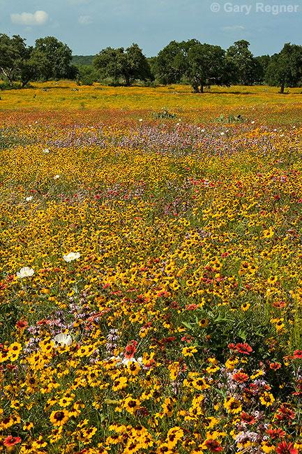 Field of Dreams by gregner
