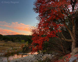 Lost Maples by gregner