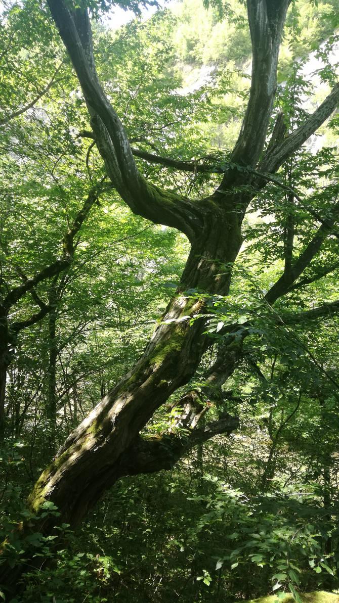 Sloping tree