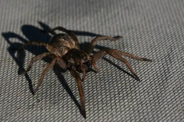 Macro Shot: Spider