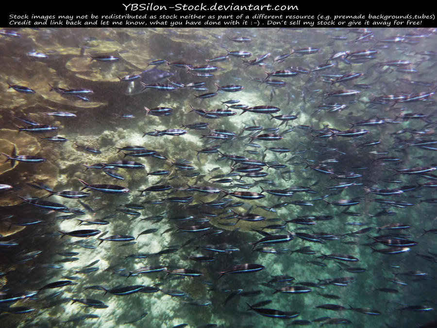 Shoal by *YBSilon-Stock