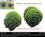 Box Trees II by YBsilon-Stock