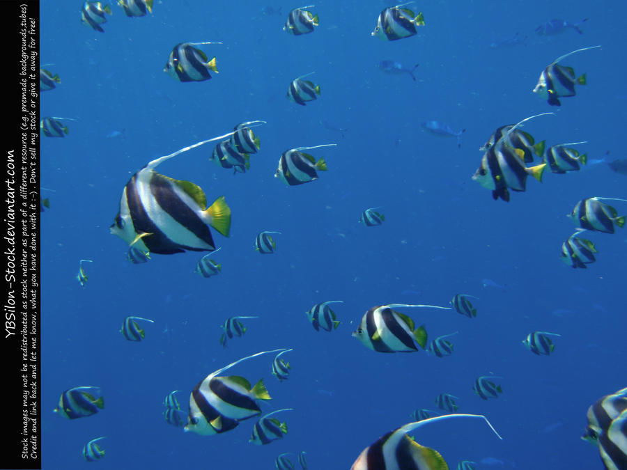 Schooling Bannerfish Shoal II by *YBSilon-Stock