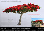 Flamboyent Tree by YBsilon-Stock