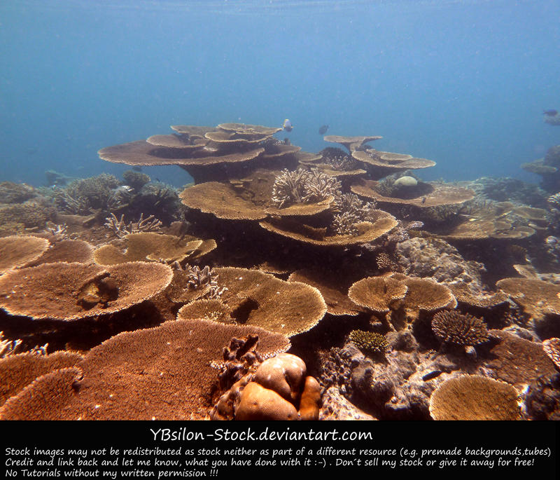 Underwater XI by YBsilon-Stock