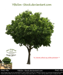 Green Tree by YBsilon-Stock