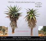 Cactus-Tree by YBsilon-Stock