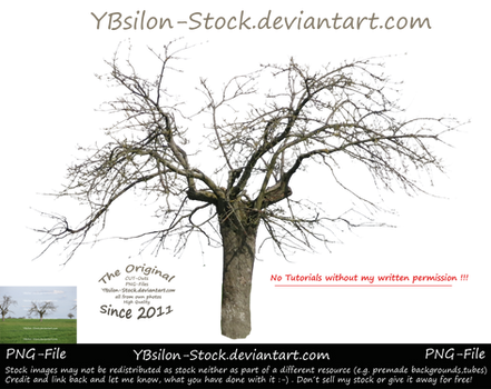 Bare-Branched Tree by YBsilon-Stock