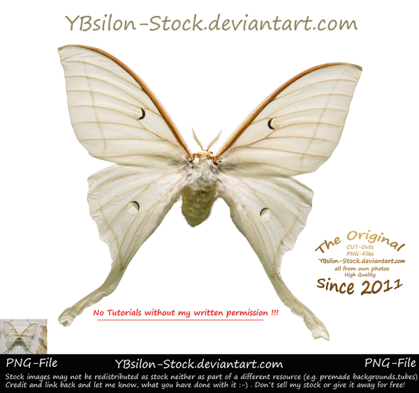 White Moth by YBsilon-Stock by YBsilon-Stock