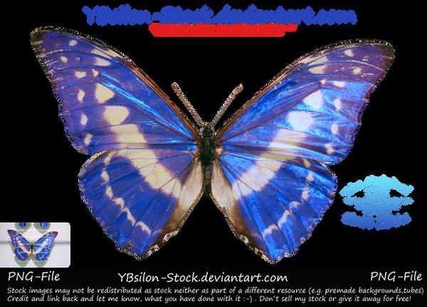 Blue Butterfly by YBsilon-Stock by YBsilon-Stock