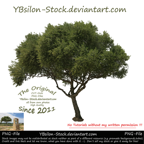 Tree for you by YBsilon-Stock by YBsilon-Stock