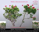 Geraniums by YBsilon-Stock