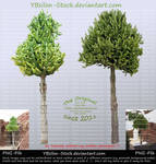 Cactus Trees II by YBsilon-Stock