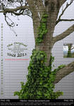 Tree with Ivy II by Ybsilon-Stock