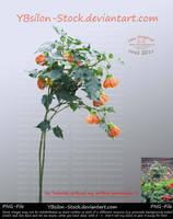 Little Orange Hibiscus-tree by YBsilon-Stock by YBsilon-Stock
