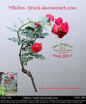 Red Roses Bush by YBsilon-Stock