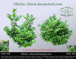 Green-Bushes by YBsilon-Stock