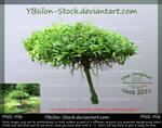 Little unusual Tree by YBsilon-Stock