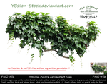 Ivy IV by YBsilon-Stock