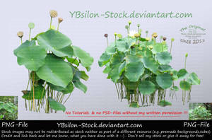 Lotus II by YBsilon-Stock