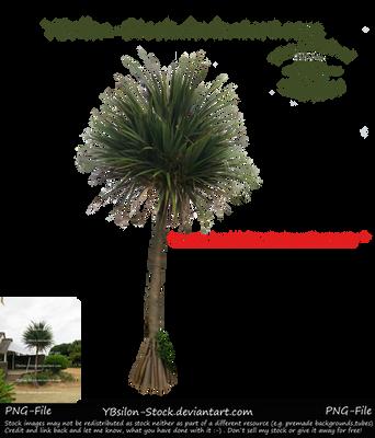 Palmtree II by YBsilon-Stock
