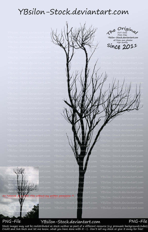 Tree without leaves by YBsilon-Stock