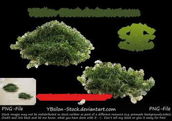 Algae by YBsilon-Stock