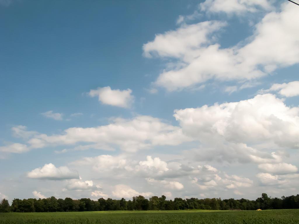 Biomass Now: