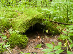 Little cave in the woods