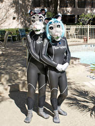 Snow Spottycats by the Pool