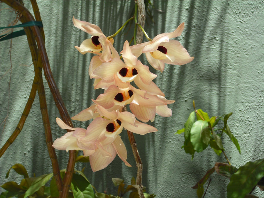 Orchids 2 by TheFlowerGirl13