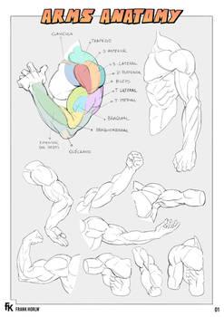 Arms Anatomy 01