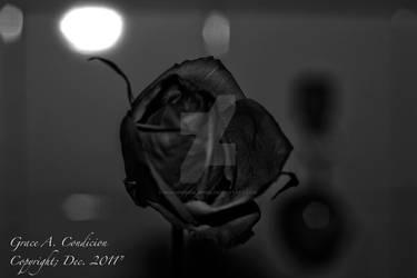 Random Rose