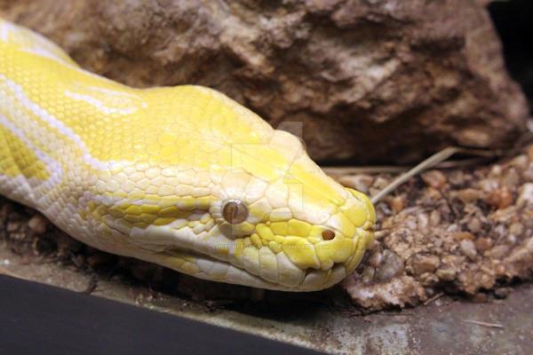 Snakes by SweetNerdyCakes