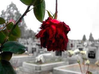 Sometimes love has to die by violet-funeralflower
