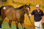 Thoroughbred yearling stock