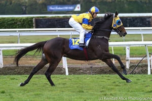 Thoroughbred racehorse stock by Valkyrie-Stock