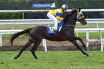 Thoroughbred racehorse stock